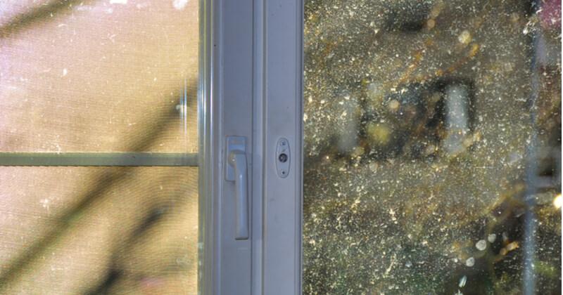 大掃除 窓 花粉